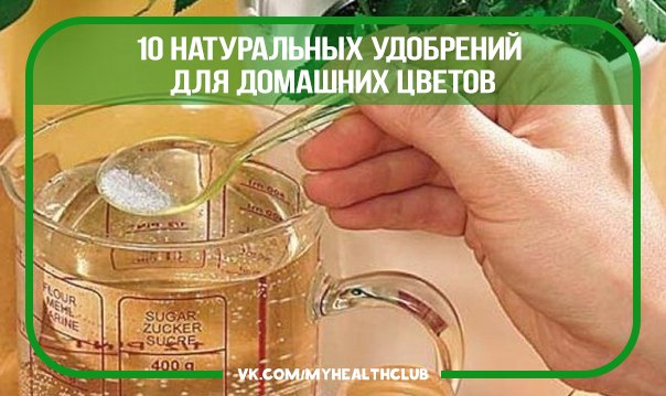 касторка для комнатных растений как подкормка России Guahoo появилась