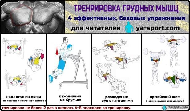 Мускулатура упражения : Коллекция иллюстраций