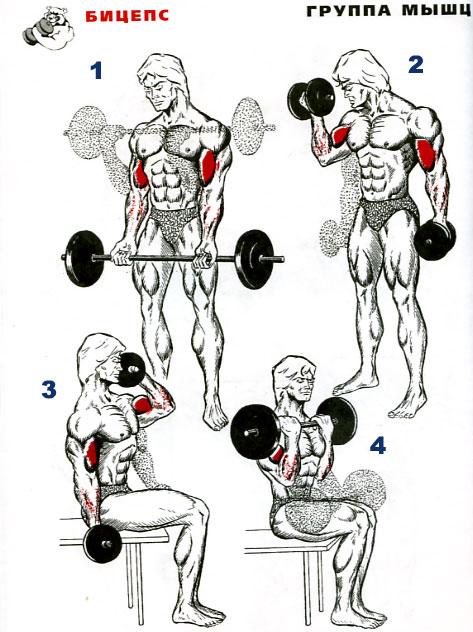 Как правильно накачивать мышцы в домашних условиях