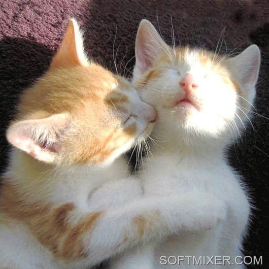 Когда кот перебирает лапами