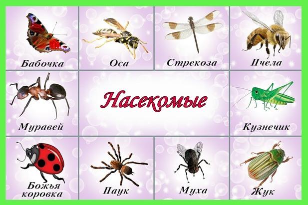 Знакомство в старшей группе с темой насекомые