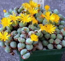 Его можно признать эти цветы