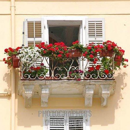 Серко: нет балкона как сделать цветник.
