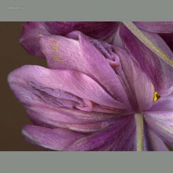 фото цветка похожего на влагалище