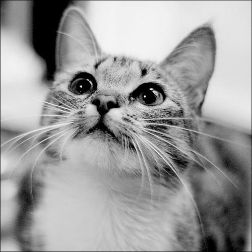 Болезни рта у кошек фото