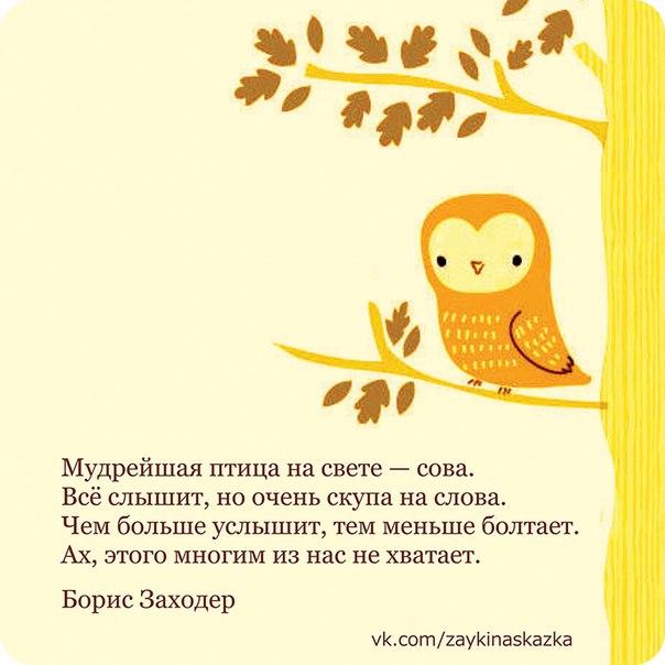 Мудрость и сова стих