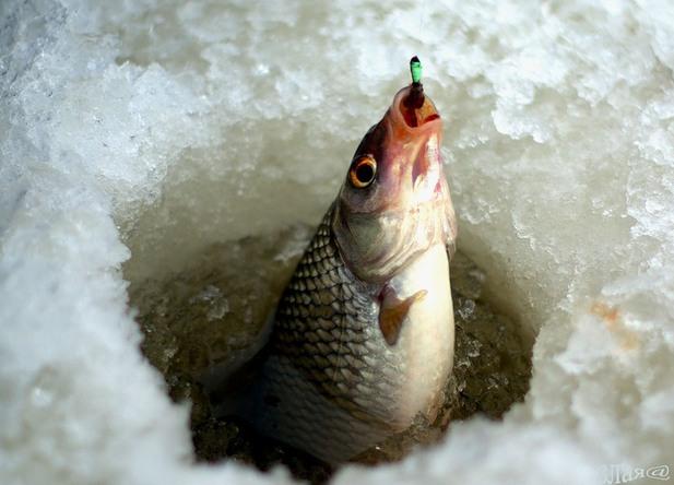 прогноз клева рыбы иванковский район