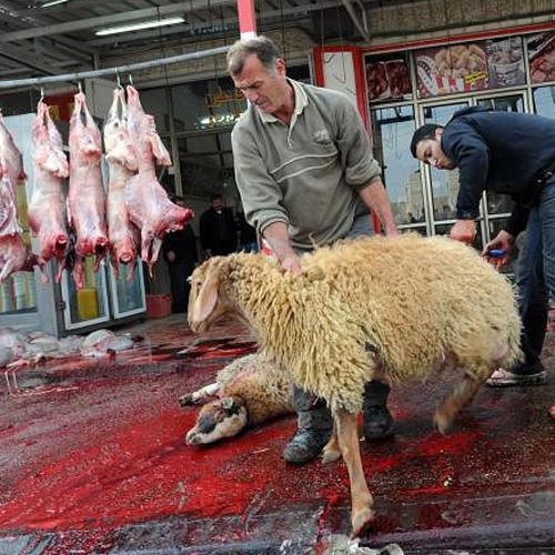 Овцы на мясо в домашних условиях 767