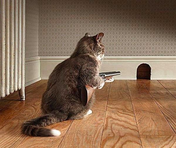 полиция ловит мышь