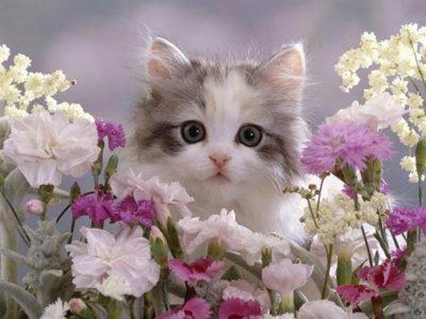 Открытка с котом и цветами 20