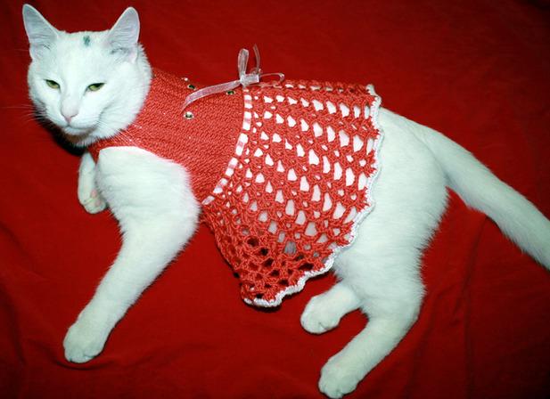 Вязание крючком на кошку 476