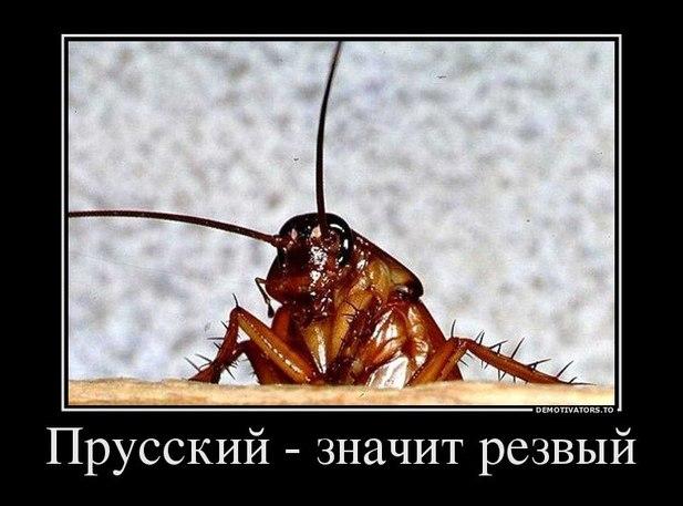http://f.mypage.ru/b39b5d36898a6f87b977e9c4c1660816_079610cfa8b10f99f74ea205cedbf351.jpg