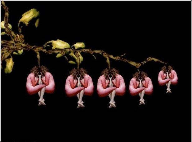 мужской цветок фото: