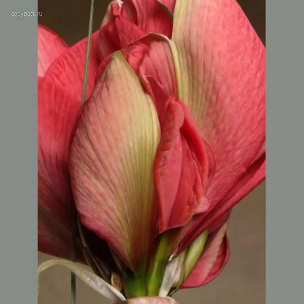 фото цветов в виде секса