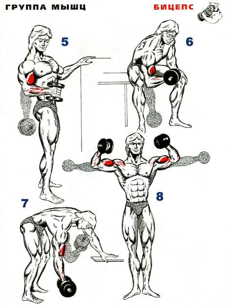 Как качать свои мышцы в домашних условиях