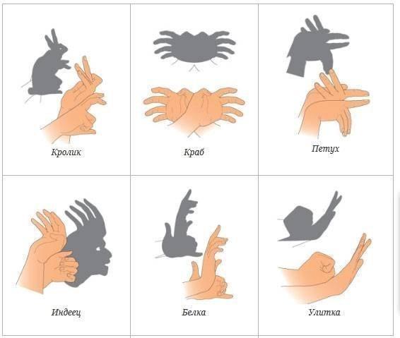 Как сделать тень животных из рук в руки
